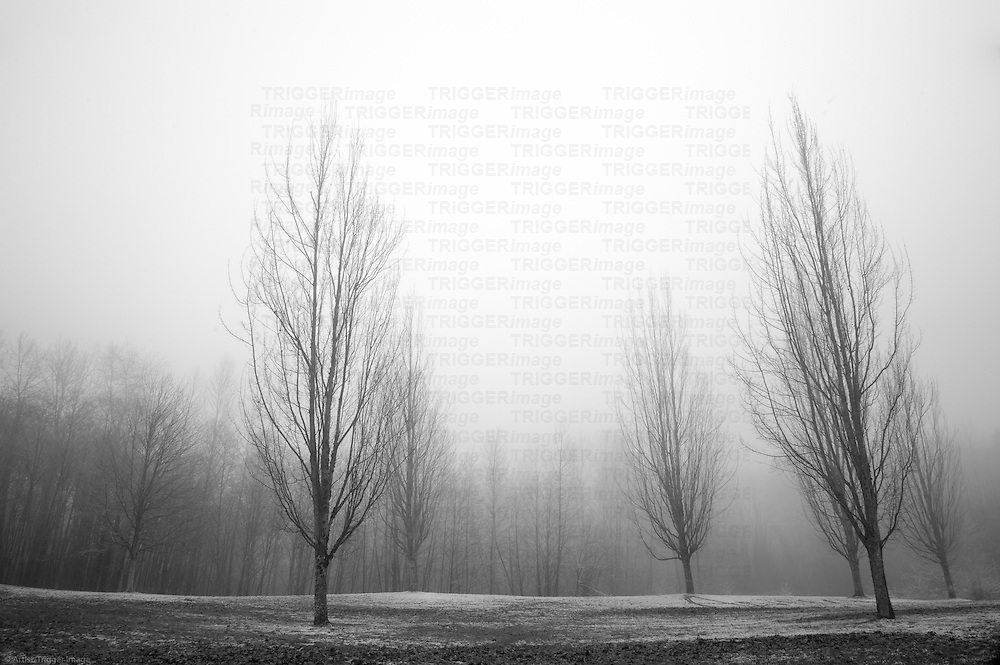 Trees in the fog with a ground covered in frost.