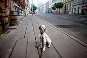 """English Setter Welpe """"Rudy"""" reist am 14.05. 2017 zum ersten Mal in eine fremde Stadt nach Brno (Brünn) in der Tschechischen Republik. Rudy wurde Anfang Januar 2017 geboren und lebt seit einiger Zeit mit deiner neuen Familie."""