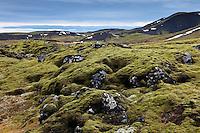 Mosi og Lynd við Innstadal. Moss and Lava at Innstidalur, Iceland.