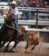 Competitor during the Tie-Down Roping event misses the calf and ends with a no score, 25 Jul 2007, Cheyenne Frontier Days