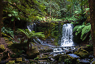 Small waterfalls in the Tasmanian rain forest cascade over a cliff and converge
