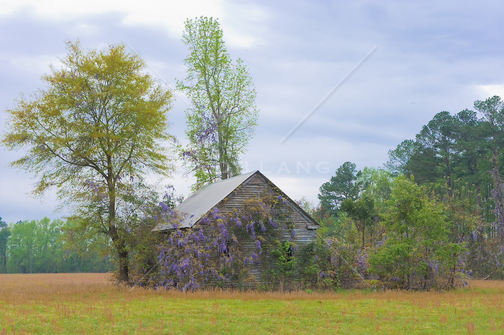 House in a field overgrown with trees and plants