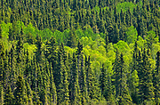 Boreal forest at Trail Lake in spring<br />