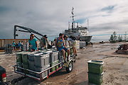 Volunteers and interns help unload supplies from the M/V Kahana on Johnston Atoll, a tiny, mostly man-made former military base that is now managed by the U.S. Fish and Wildlife Service that sits a little over 850 miles southwest of the island of Hawai'i and is part of the Pacific Remote Islands Marine National Monument. For most of the 20th Century, the United States military used the atoll for submarine and aircraft refueling, a nuclear and biological weapons testing, chemical weapons such as nerve gas and mustard agent and Agent Orange Storage and the demilitarization and incineration of chemical weapons, to name a few. These military activities have left the island contaminated with Agent Orange, aesbestos and Plutonium. The atoll provides nesting grounds for a number of bird species, including the Red-tailed Tropicbird, the White-tailed Tropicbird, the Brown Booby, the Masked Booby, the Red-footed Booby, the Sooty Tern, the White Tern, the Brown Noddy, the Black Noddy, the Great Frigatebird, and an assortment of migratory shorebirds. For the last few years, teams of biologists and volunteers have camped on the island in six-month rotations to combat and try to irradicate the Yellow Crazy Ant, an invasive ant species that doesn't bite, but will swarm birds that nest on or near the ground and blind them through secretions of formic acid.