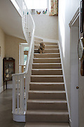 The front hallway at Will Gissane's Herefordshire home with Fuzzypeg, the cat, on the stairs<br /> CREDIT: Vanessa Berberian for The Wall Street Journal<br /> HOBBY-Gissane/UK