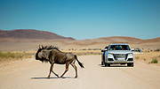 Client - Audi | Location - Namibia | Agency - RightLight Media