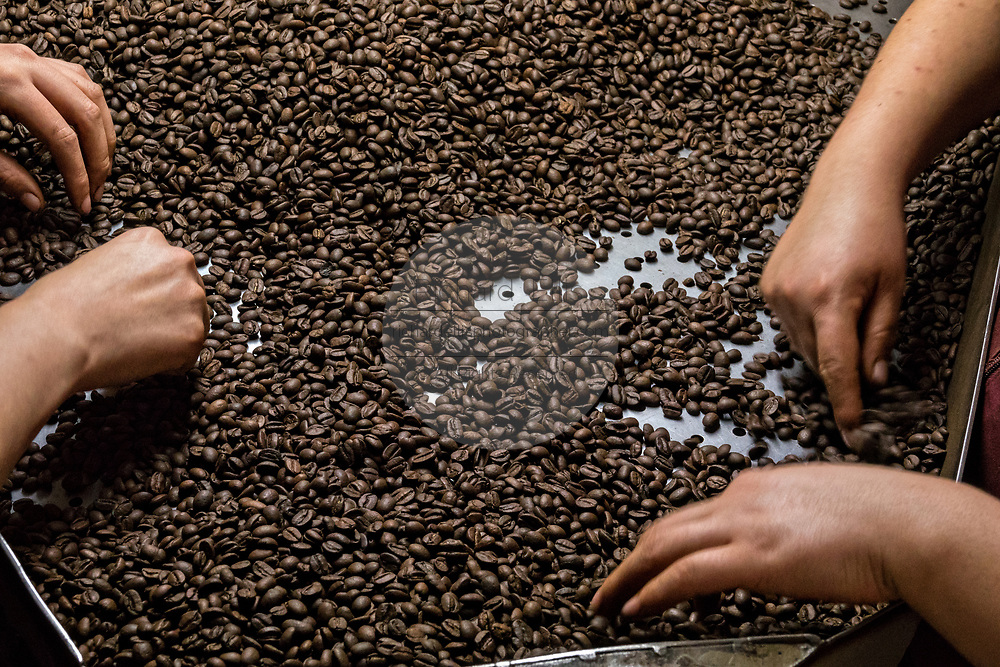 Women sort and grade roasted coffee beans at the Old World Coffee company in Uruapan, Michoacan, Mexico. Coffee cultivation in the volcanic mountainous region of Uruapan is slowly being replaced by Avocado farms.