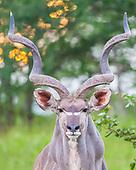 AFRICA/ WILDLIFE