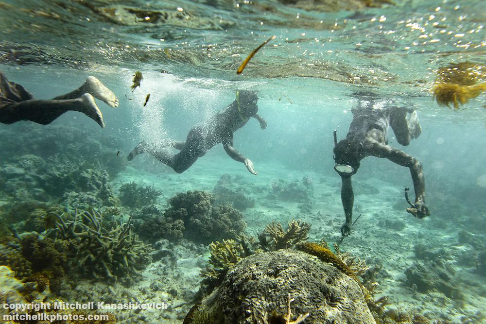 Ni Vanuatu men looking for fish, which hides among coral and in underwater burrows. Uleveo, Maskelyne Island, Malampa Province, Malekula, Vanuatu