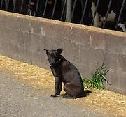 Point Reyes Farmstead mascot