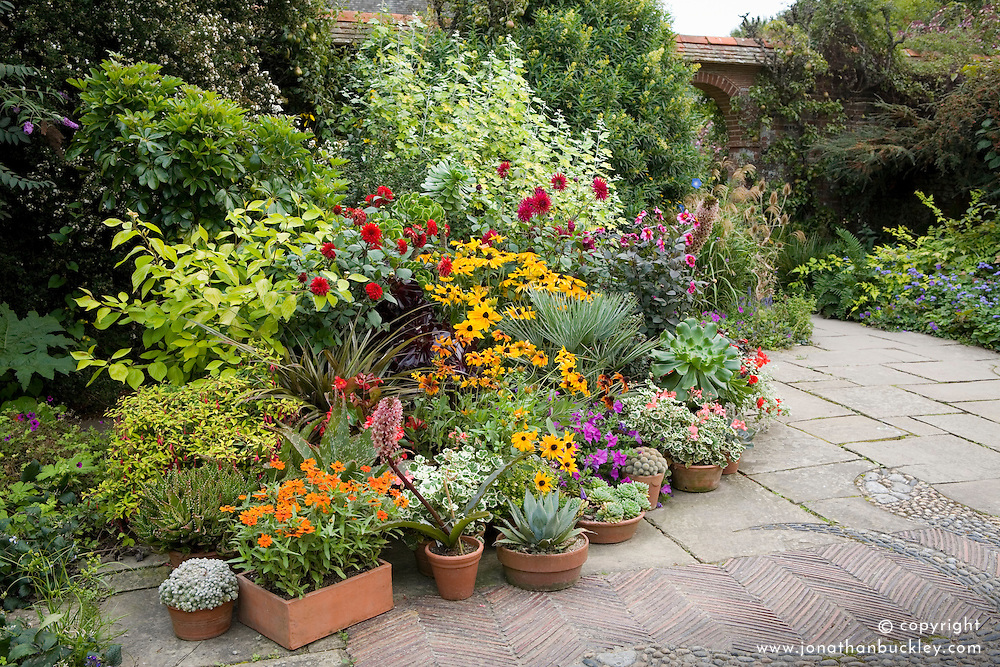 A collection of containers in the mosaic garden at Great Dixter in autumn. Pants include dahlias, rudbeckia, petunias, succulents, pelargoniums, aeonium, plam and eucomis