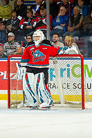 KELOWNA, BC - OCTOBER 16:  Cole Schwebius #31 of the Kelowna Rockets stands in net during first period against the Swift Current Broncos at Prospera Place on October 16, 2019 in Kelowna, Canada. (Photo by Marissa Baecker/Shoot the Breeze)