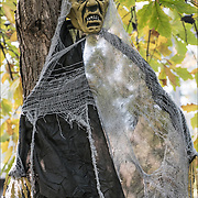 Halloween decoration hanging in tree in park on 8th Avenue and  Greenwich Avenue, NYC.