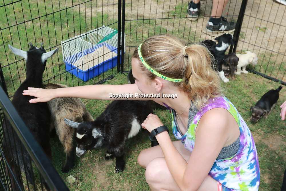LIBBY EZELL | BUY AT PHOTOS.DJOURNAL.COM<br /> Avery Hendon, 12 pets the goats at the petting zoo during Saturday's Arc in the Park event