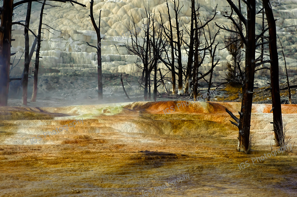 Charred Landscape of Canary Spring, Mammoth Hot Springs