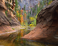 West Fork, bend in creek, fall color, Sedona, AZ