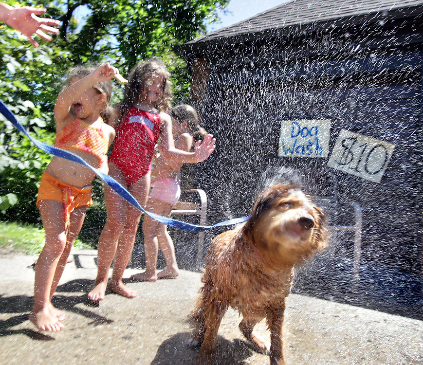 """We don't really like cats,"" said Alex Hughes, 6, second from left, about why she decided to put on a dog wash recently in her Grosse Pointe Park driveway.  Originally Alex wanted to have a traditional lemon aide stand, but decided on the dog wash because she wants to be a vet when she grows up.  With moms help they worked out a budget and a price point of $10 per wash that included free water and dog treats. Each friend that helped  earned $1 per dog, and $2 was donated to the Grosse Pointe Animal Adoption. Lastly they plastered the  neighborhood with flyers and hand drawn sidewalk chalk ads and waited for business to walk in. Jesse, an 11-year-old Nova Scotia duck tolling retriever decided to shake herself dry."