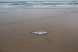 dead fish on the beach in Montauk, NY