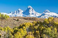An autumn snow coinciding with the golden aspen of fall make Teton Valley Idaho a dang pretty place to be in October.