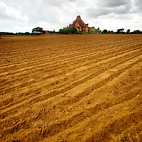 Fresh plowed field near Bagan temple
