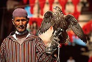 MOROCCO, MARRAKECH Medina; bird trainer with falcon