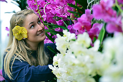 © Licensed to London News Pictures. 06/02/2014. Kew, UK. Horticulturist Jess arranges the displays. Orchids, the first festival on Kew's 2014 events calendar showcases thousands of exotic and rare orchids. The tropical display can be viewed at The Princess of Wales Conservatory, where it's always hotter than 21°C, Kew Gardens, Saturday 8 February to Sunday 9 March 2014. Photo credit : Stephen Simpson/LNP