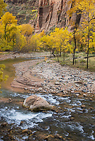 Fall foliage along the Virgin River, Zion National Park Utah USA
