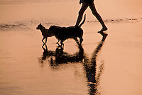 Dogs and walker reflected on a beach in seminyak, Bali, Indonesia