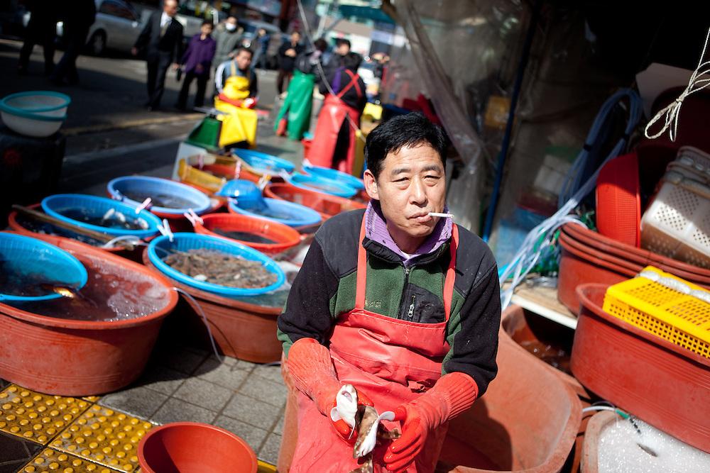 Jagalchi Fish Market, Busan, South Korea, Republic of Korea, KOR, 15 February 2010.
