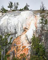 https://Duncan.co/upper-terraces-mammoth-hot-springs