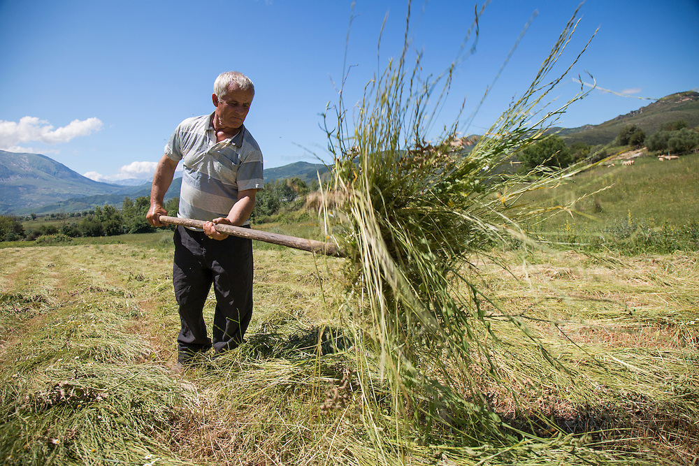 A farmer from Kuta turns hay in a field that will be flooded if the Vjosa River is dammed.