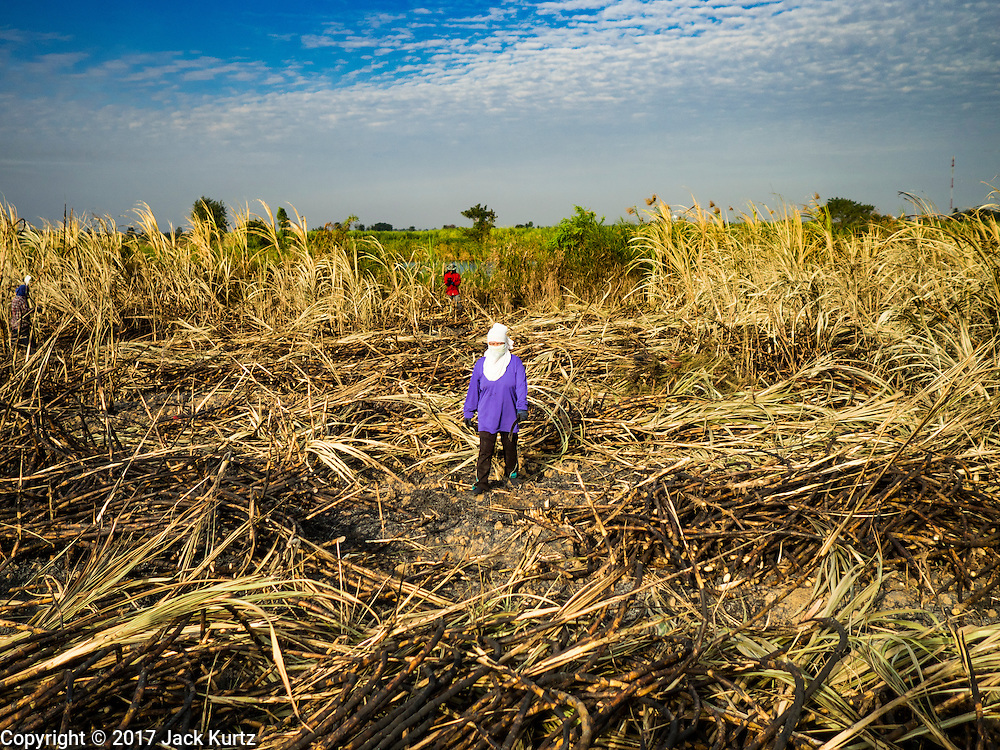 24 JANUARY 2017 - PHRA THAEN, KANCHANABURI, THAILAND: A sugarcane worker walks through a cane field in Phra Thaen. Thai government  officials recently announced that they plan to float sugar prices later this year or early in 2018. Wholesale prices are currently set by the Cane and Sugar Board, a part of the Industry Ministry, while the Commerce Ministry sets the retail price. Thailand has fixed retail prices of sugar to guarantee a profit for farmers. Thailand is the world's leading exporter of sugar, after Brazil. Thai sugar production is expected to drop by more than three percent because of the lingering drought that crippled agriculture through 2015 and 2016.    PHOTO BY JACK KURTZ