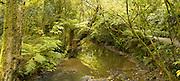 Panoramic view of Purukauniu River, just upstream from Purukaunui Falls; The Catlins, South Island, New Zealand
