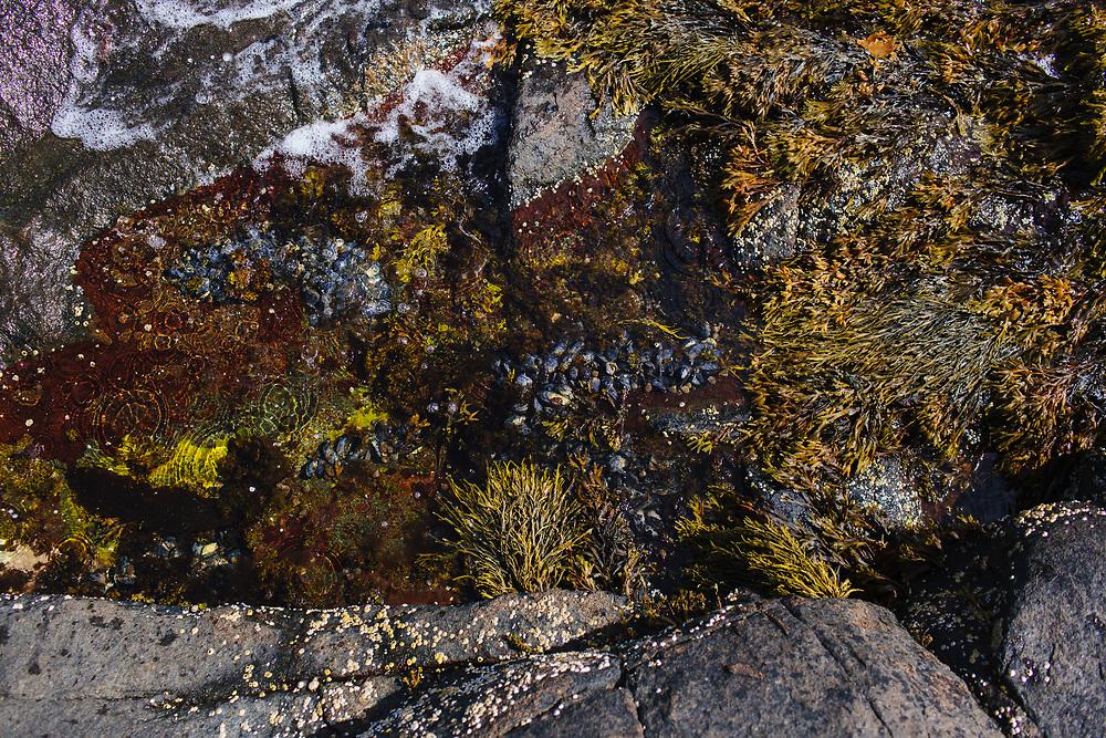 Ocean Plants on rocky shore.