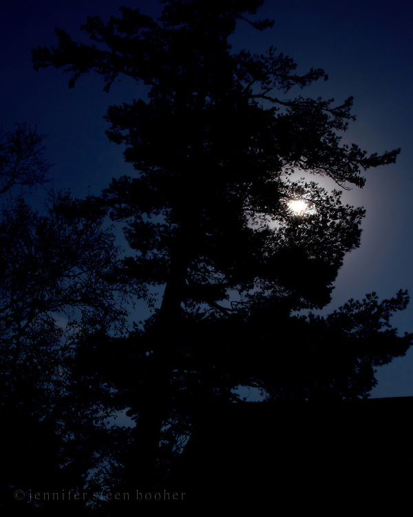 Pine tree silhouetted against full moon, Baxter State Park, Maine.