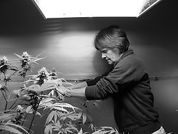 Ellen Tends to Her Medicine. Medicinal marijuana helps Ellen with the chronic pain and muscle spasms resulting from the Ehlers-Danlos Syndrome.  In Rhode Island, where Ellen live, she is legally allowed to grow a small number of marijuana plants at home, strictly for her own use, with a doctor's prescription. RI, 2010.