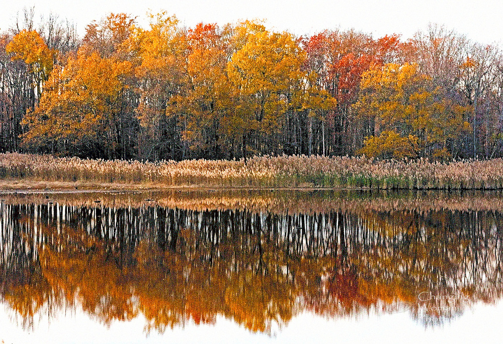 A still pond at Delaware's Bombay Hook wildlife refuge provides a perfect mirror for the blazing late-autumn colors still clinging to the shoreline trees. Red, orange, and yellow leaves pop against a cloudy white sky and its reflection in the glassy water. This image has been digitally edited for impressionistic effect.