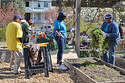 Chapelseed Community Gardens, New Haven CT