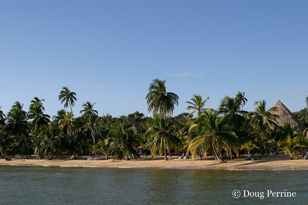 beach at Kanantik Resort, Stann Creek District, near Dangriga, Belize, Central America ( Caribbean Sea )