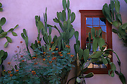 Cactus and window in the Barrio Historico, the historical section of Tucson, Arizona. The Barrio Historico was an important business area in the late 1800s, and continues to house some small businesses today.