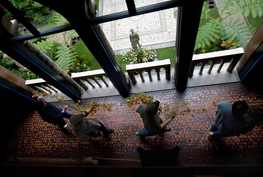 "(Boston, MA - March 30, 2009) - Stan Kozak and his crew walk the nasturtiums for the Spring courtyard exhibit up to the third floor at the Isabella Stewart Gardner Museum. The nasturtiums display is the most popular and shortest of the four seasonal garden exhibits at the Gardner museum. Carrying on a tradition started by Mrs. Gardner in the early 1900s, Kozak grows the nasturtiums in greenhouses for 10 months, until they are about 20 feet long, before they are hung in March and usually they last around 3 weeks. ..He says, ""I know the phone calls begin in early January as to when the nasturtiums will be on display, so I think there is a great responsibility there that we continue what we've been doing for the last 80-90 years.""..Photo by Will Nunnally/Will Nunnally Photography"
