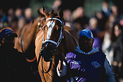 Breeders' Cup Filly & Mare Sprint (Race 3) (Dirt) <br /> November 3, 2018: Golden Mischief in the paddock for the Breeders' Cup Filly & Mare Sprint on Breeders' Cup World Championship Saturday at Churchill Downs on November 3, 2018 in Louisville, Kentucky.