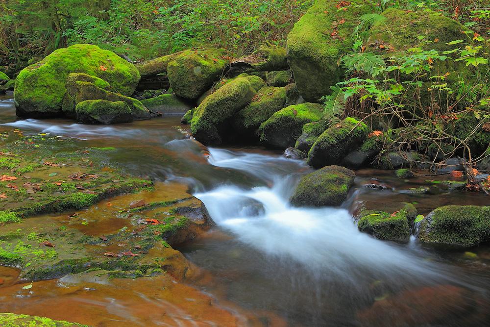 Sweet Creek Lower Cascade Falls - Mapleton, Oregon