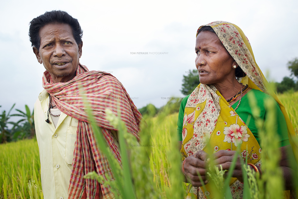 Amar Singh Patel and his wife, Sona Bai on their plot of SRI cultivated rice, two weeks before harvest. ..Amar Singh Patel, age 60 owns owns 5 acres of land, 1.5 of which is irrigated. He lives in Rathkhandi village, Bilaspur District, Chhattisgarh State with his wife Sona Bai, their daughter and son-in-law and four grandchildren...On this irrigated land, Amar Singh's family cultivate rice using the SRI technique together with a small vegetable plot. The remaining 3.5 acres are leased out to share-croppers. Amar Singh was introduced to SRI by Oxfam partners Jan Swasthya Sahyog (JSS) and began growing rice using this technique in 2007...Amar Singh's land did not always produce enough food for his family to eat. When Amar Singh was a young man, he and his family had to eat wild flowers to survive. They also had to sell their cattle, buy clothing on credit and migrate in search of work...The JSS introduced SRI to Amar Singh and others in his village. SRI is an organic system of intensively growing rice that can double crop yields double. ..Using SRI, Amar Singh and his family produce enough rice for all of their annual needs from only 1.5 acres of land. They now never go hungry...By using SRI Amar Singh never has to spend money on expensive chemicals which degrade the soil. SRI also uses less seed. With fewer inputs Amar Singh has made savings and invested these in his farm. Last year he purchased a new bullock cart. And Amar Singh's grandchildren no longer have to work the land when they should be at school as he did when he was a child. ..The JSS have recruited Amar Singh to advocate for SRI and teach other farmers the benefits of this system of agriculture. ..Photo: Tom Pietrasik.Chhattisgarh, India.November 2012