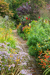 Brick path through the hot borders at Glebe Cottage. Dahlia 'Bishop of Llandaff', Rudbeckia fulgida var. deamii, Aster 'Little Carlow', crocosmias, gladiolus and Cotinus coggygria Purpureus Group