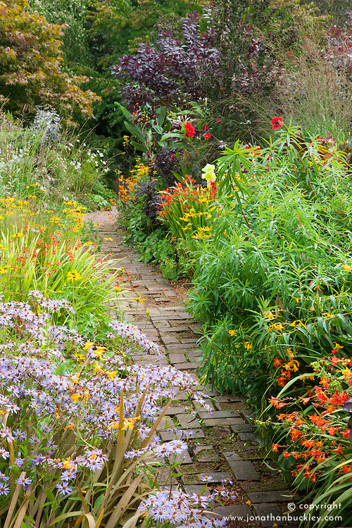Brick path through the hot borders at Glebe Cottage. Dahlia 'Bishop of Llandaff', Rudbeckia fulgida var. deamii, Aster 'Little Carlow', crocosmias, gladiolus and Cotinus coggygria Purpureus Group