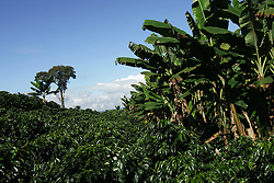 A view of the El Balso coffee farm. The tourism industry is slowly emerging in Quindio, the Colombian coffee country.  Old coffee haciendas have been turned into new hotels catering to tourists.  The countryside, some of the most beautiful in the country, is a popular weekend getaway spot where visitors can participate in a variety of outdoor activities as well as learn about coffee production.