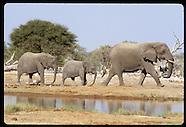 04: ETOSHA ELEPHANTS