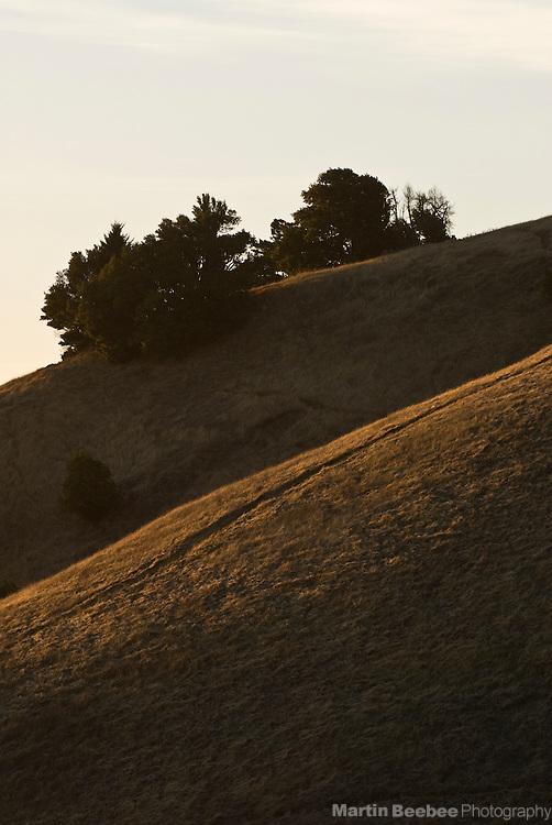 Sunset light on hillsides, Mount Tamalpais State Park, California
