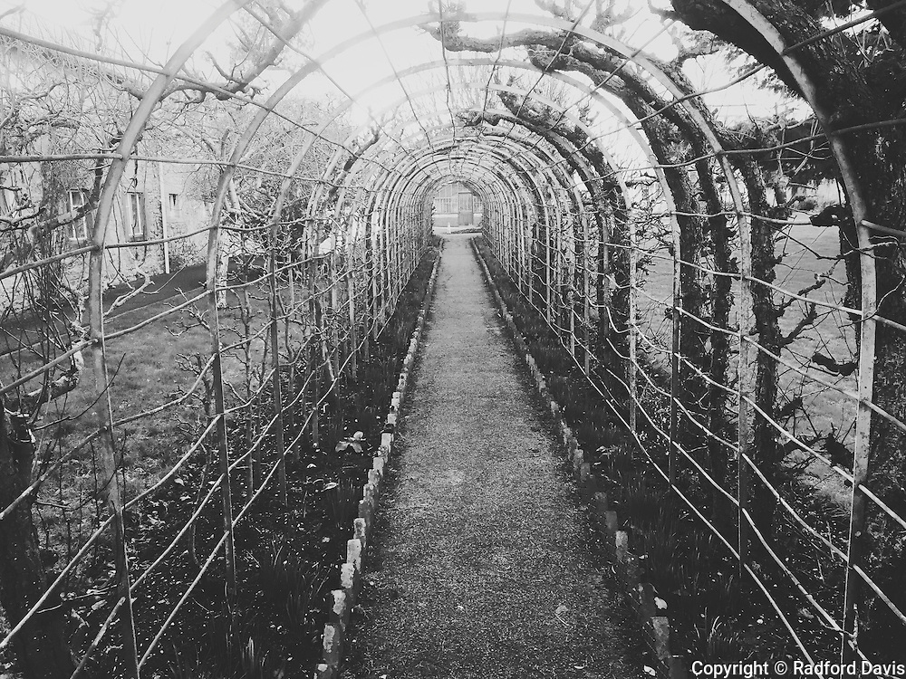 Garden path, black and white